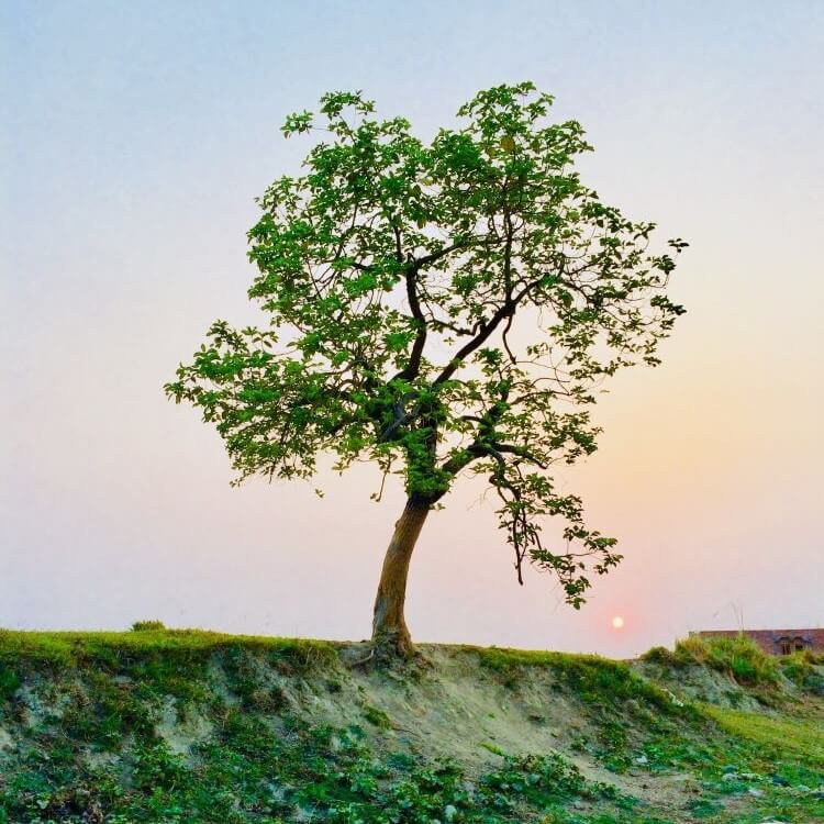 Tree on hill in front of pastel sky